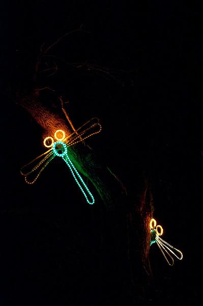 Dragonfly displays  by Piwakawaka Photo (50).jpg