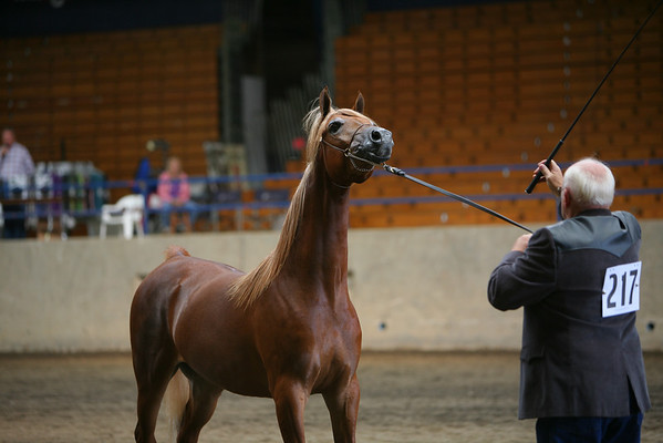 Saturday at 2008 Pacific Royal Autum Clasic Horse Show