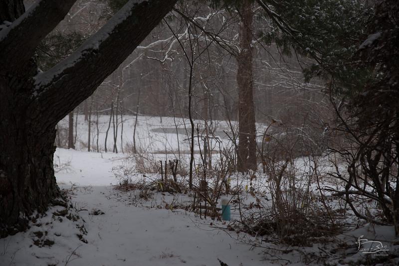 20150228 snowing walkabout_005_07518.jpg