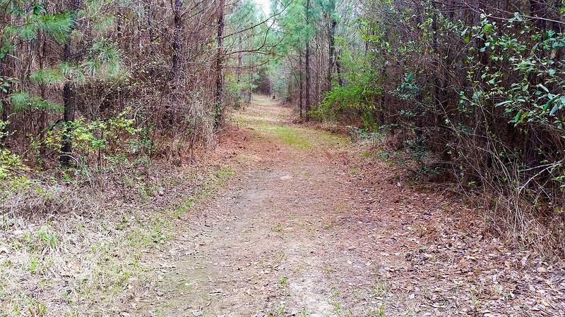 Mississippi: State Park Nature Trail
