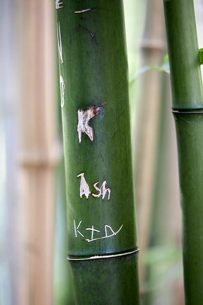 Bamboo_M4A4820.jpg