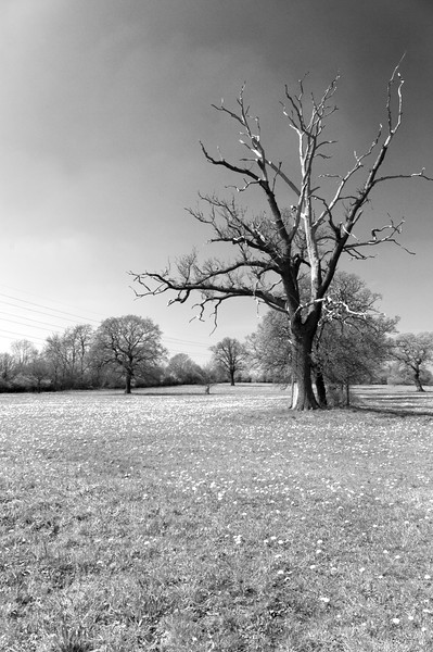 Fosters Green and Eades Meadows