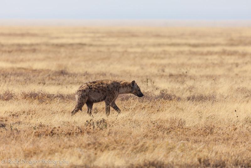 South_Serengeti-20.jpg
