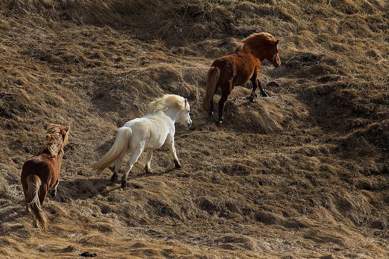 Horses_on_the_Run.jpg
