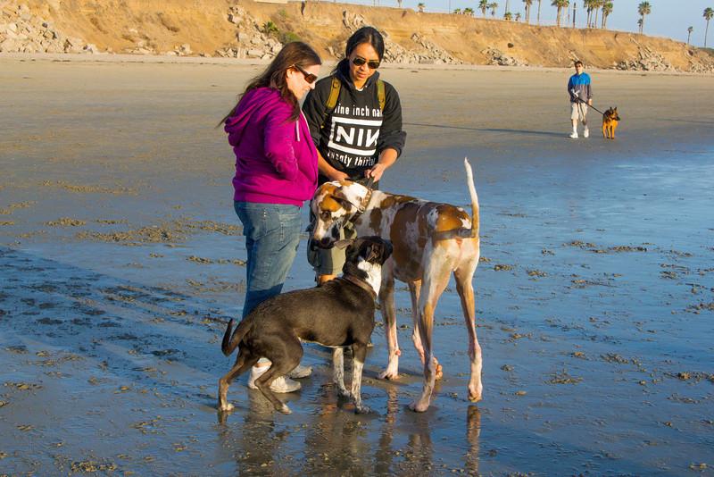 dogs_beach-69.jpg