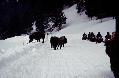 Yellowstone, Big Sky, Mo 1999