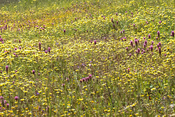 2017 • Edgewood Park • April Wildflowers