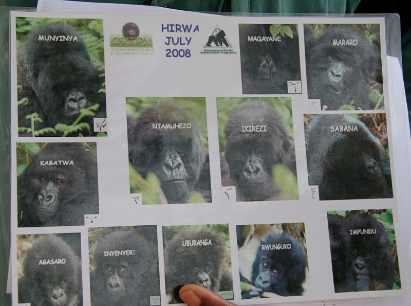 Here is the group we saw and their names. The Hirwa Group, with 12 members - 1 male silverback, 5 adult females and 5 babies