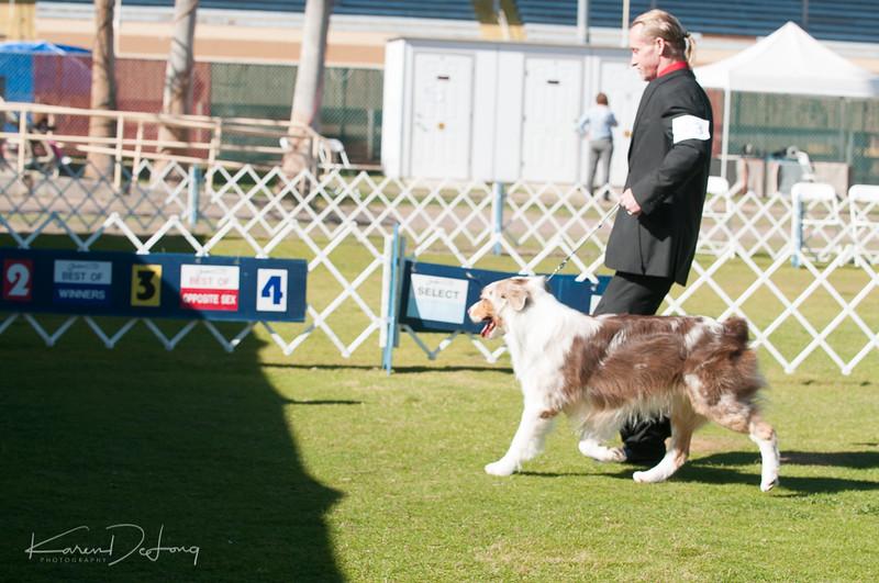 20170205_Australian Shepherds_Lost Dutchman Kennel Club-71.jpg