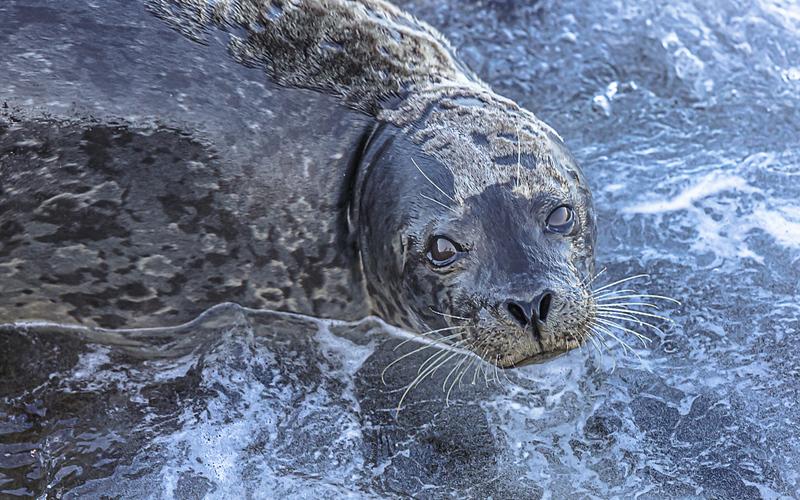 sea lion eyes.jpg