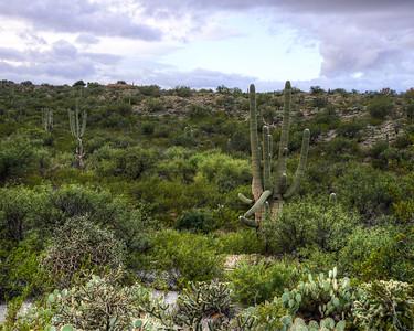 Saguaro National Park East Unit