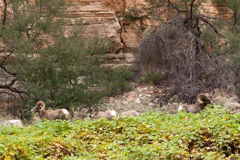Grand Canyon October-0593.jpg