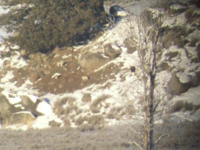 Yellowstone Winter Wolf Retreat 1.23-26.07