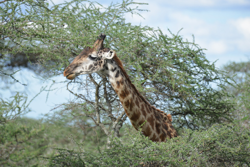 East Africa Safari 268.jpg