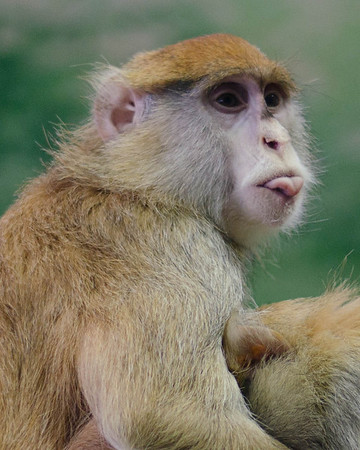 2014 Rosamond Zoo Photo Contest