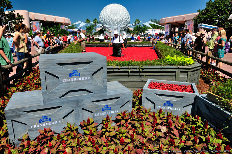 Ocean Spray Cranberry Display at Epcot's Food & Wine Festival