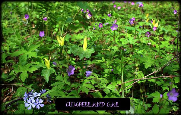 Wildflower Potpourri