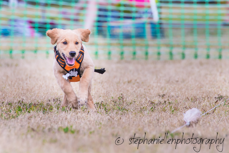 Woofstock_carrollwood_tampa_2018_stephaniellen_photography_MG_8677.jpg