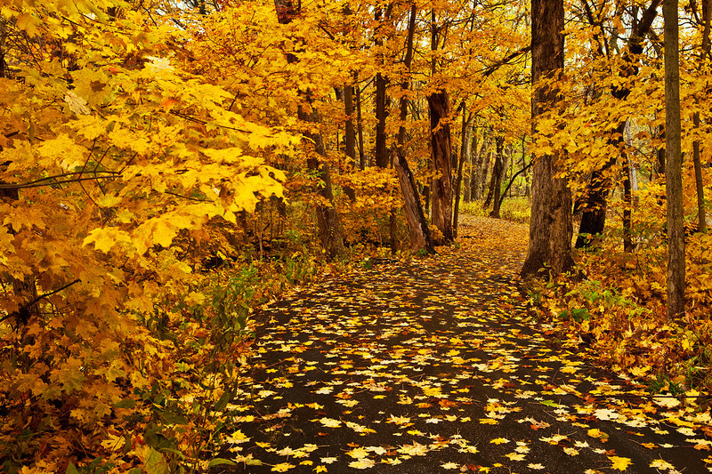 Fall color walkway, Fullersburg Woods, Illinois