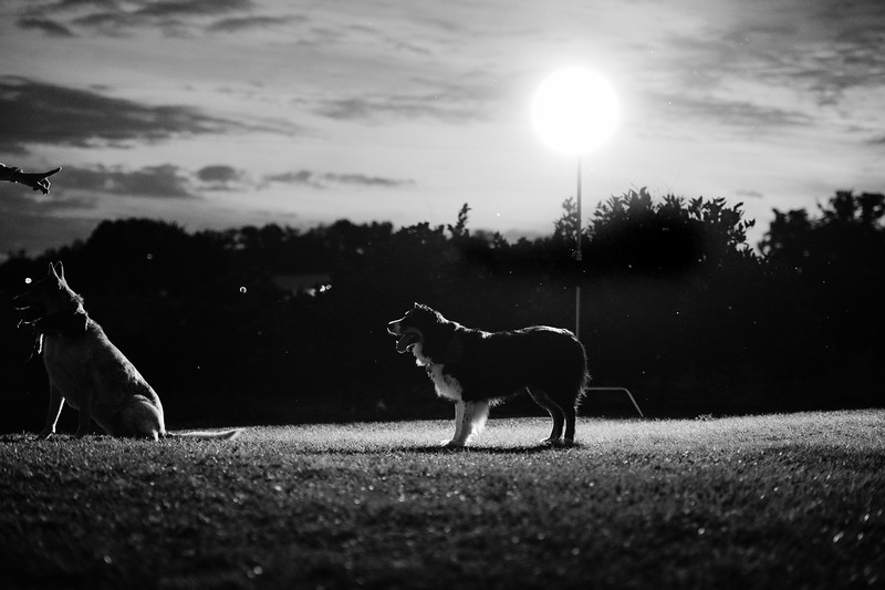 Tori & David dogs (3 of 10).jpg