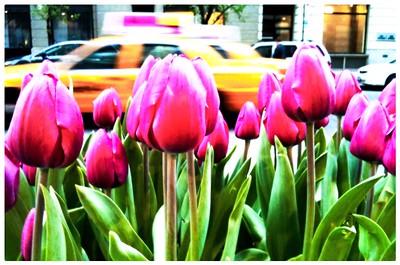 iPhone NYC