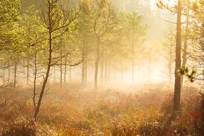 Landscapes/Maastikud