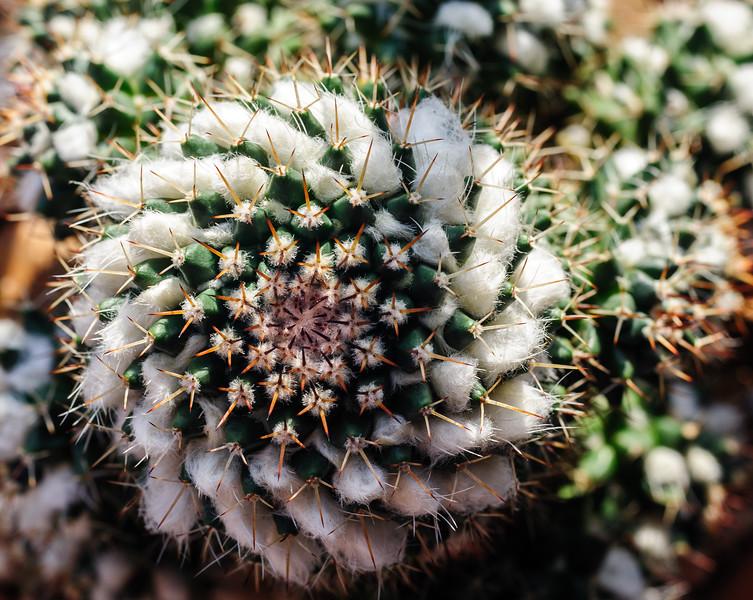 cactus-5468.jpg