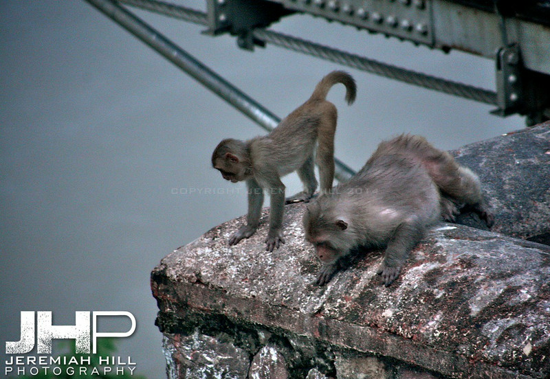 """The Lookout"", Rishikesh, Uttaranchal, India, 2007 Print IND373-510"