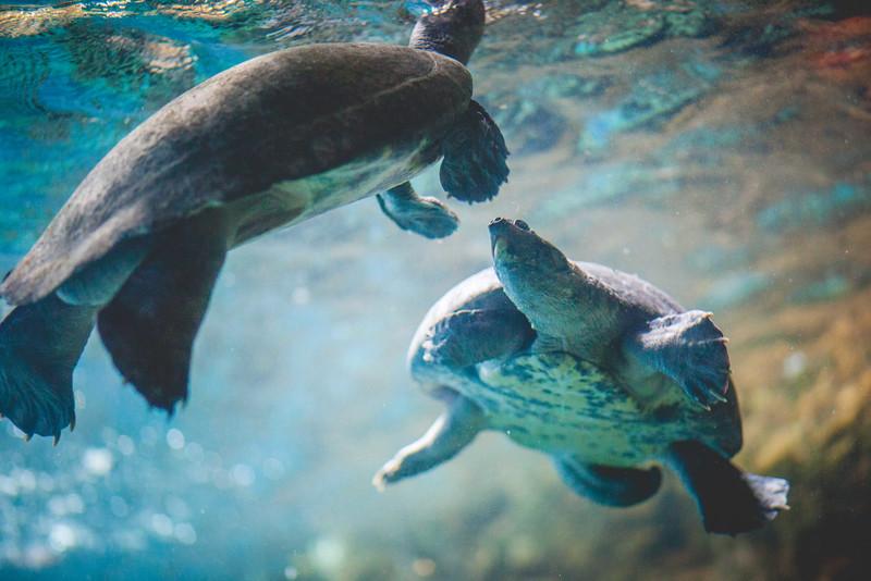 2014 10 25 Dallas World Aquarium-33.jpg