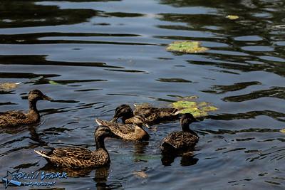 Schenectady's Central Park