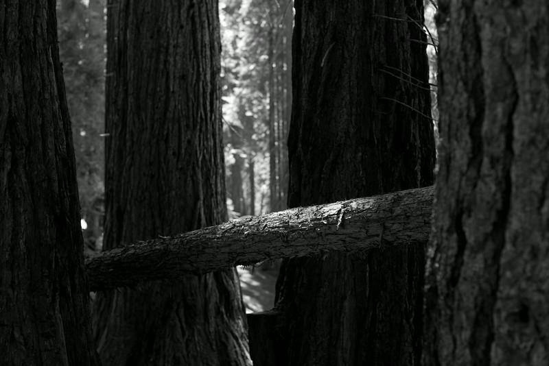 Sequoia_0172.jpg