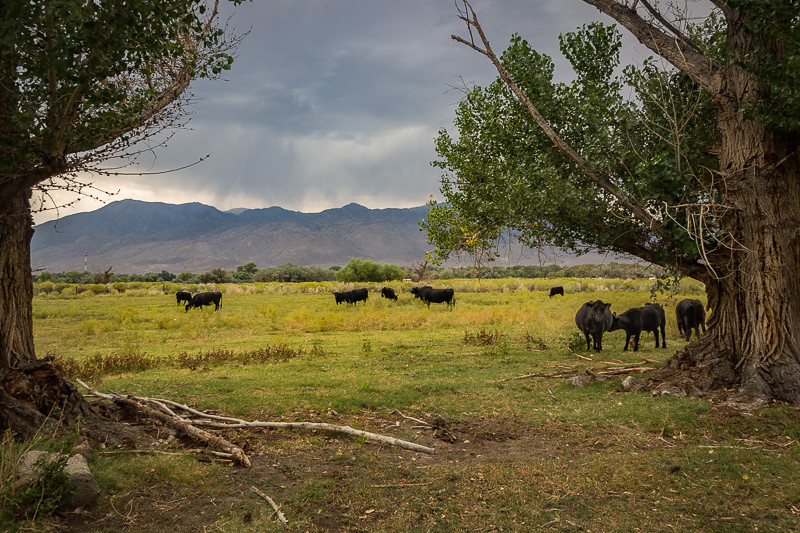 August 23 - Grazing in Bishop, California.jpg