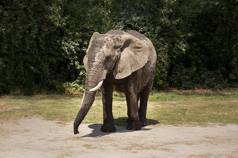 Elephant 2-.jpg
