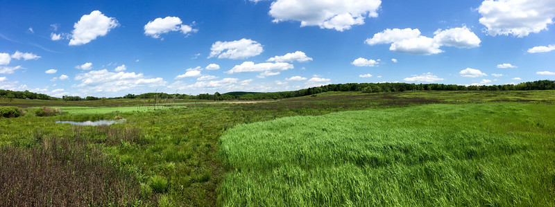 Big Meadows Pano
