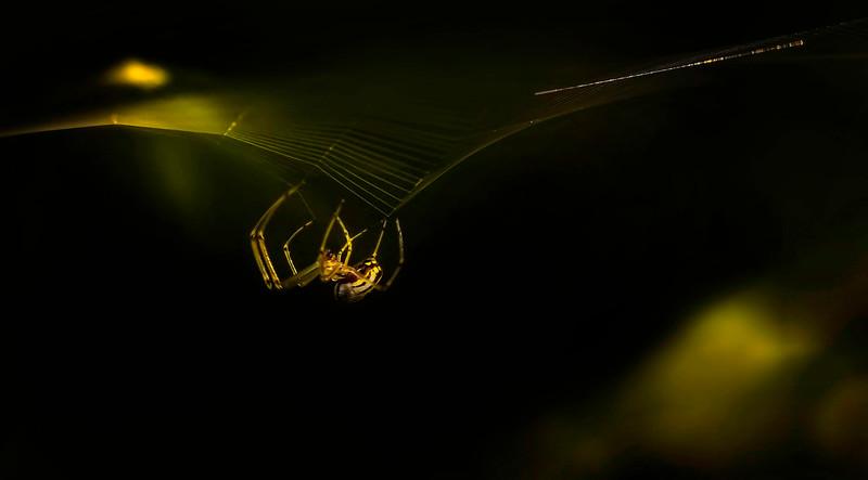 Spiders-Arachnids-120.jpg