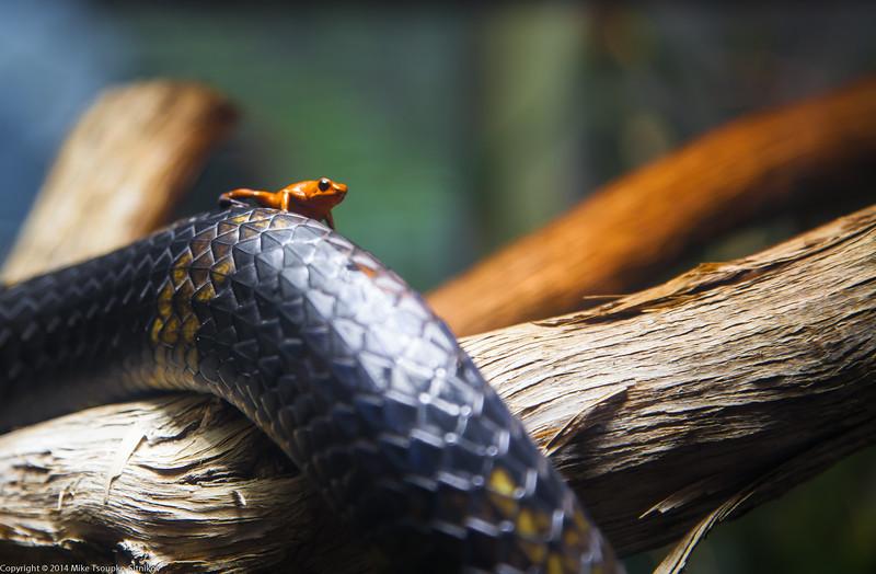 A Frog on a Snake