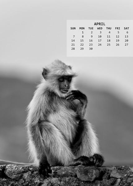 04_Jaipur_1601_0188-PS_5x7.jpg