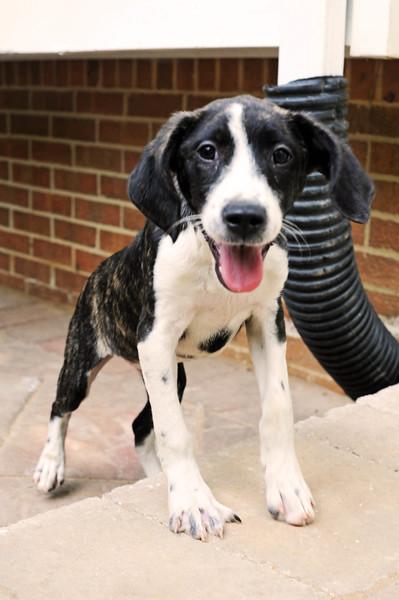 hound 1.jpg
