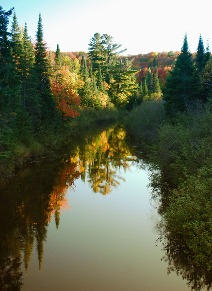 River clear trees fall jpg.jpg