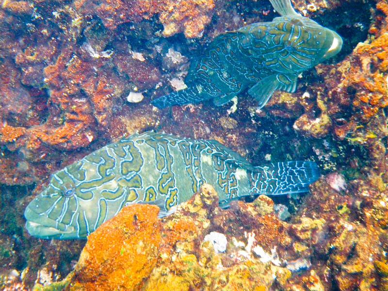 Heiroglyphic fish