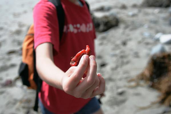 Dana Point Headlands Nature Walk