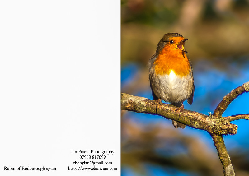 Robin of Rodborough again sky Portrait 5  x 7_.jpg
