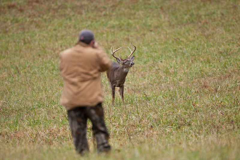 White-tailed buck with a photographer in the foreground.