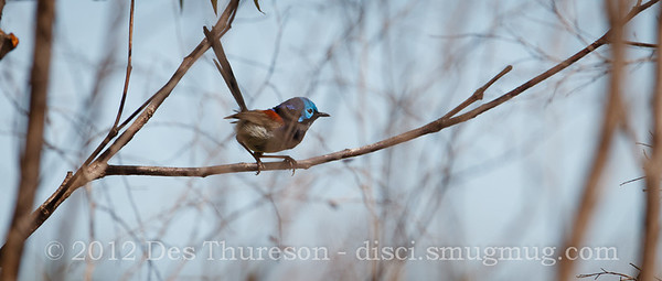 Birds & Scenery at Pine Ridge Conservation Park, Gold Coast. Photos by Des Thureson.
