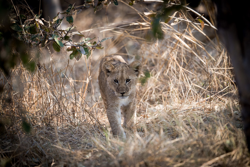 Botswana_June_2017 (2388 of 6179).jpg
