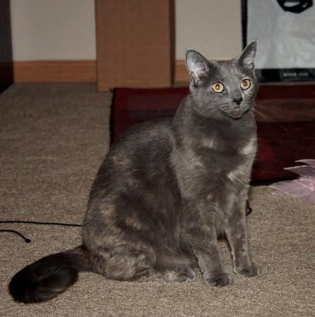 Sasha & Olive
