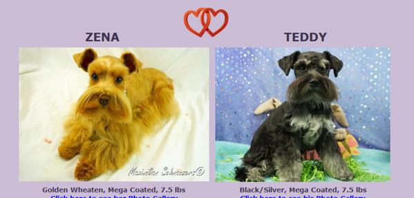Zena &Teddy's Puppies, DOB 11/15/2017