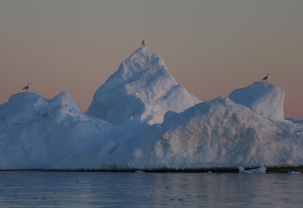 . Seagulls sit on an iceberg on July 22, 2013 in Ilulissat, Greenland.     (Photo by Joe Raedle/Getty Images)