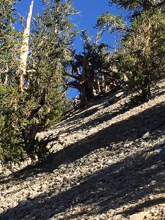 Big Pine 2018