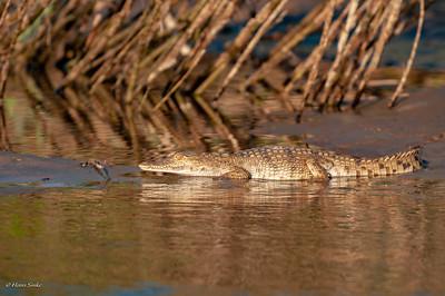 Reptielen & Amfibieën